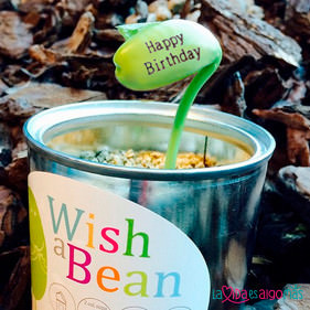 WISH A BEAN - HAPPY BIRTHDAY (ES)